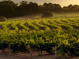 The Top 5 Wine Vineyards to Visit