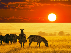 Safari! Southern Africa, the Destination for Your Next Family Vacation