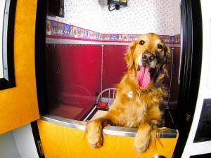 Dog Friendly Hotels Across The USA