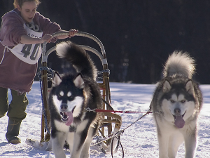 Beat the Winter Blues with a Dog-Sledding Adventure