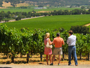 Top 10 Wine Tour Blogs