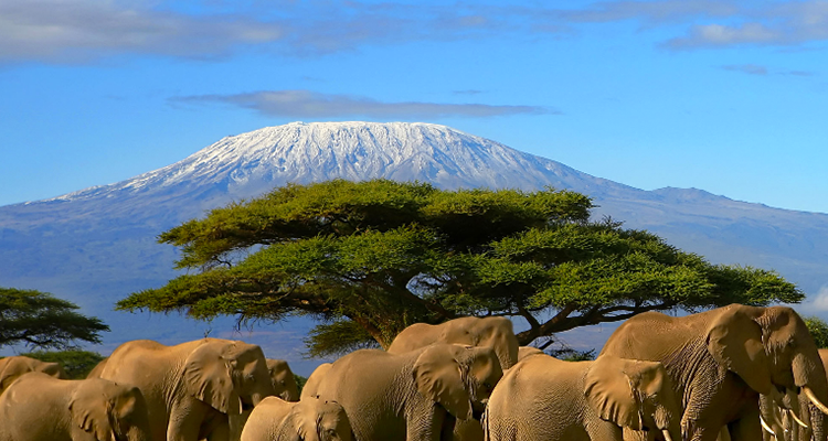 Ten reasons to visit africa 39 s east coast this winter for Winter vacation east coast