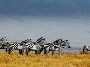 How to go on a Safari and keep safe