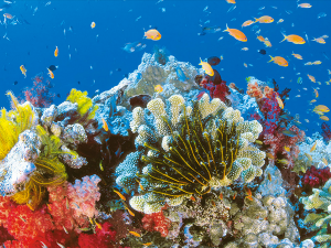 The Great Barrier Reef Adventure